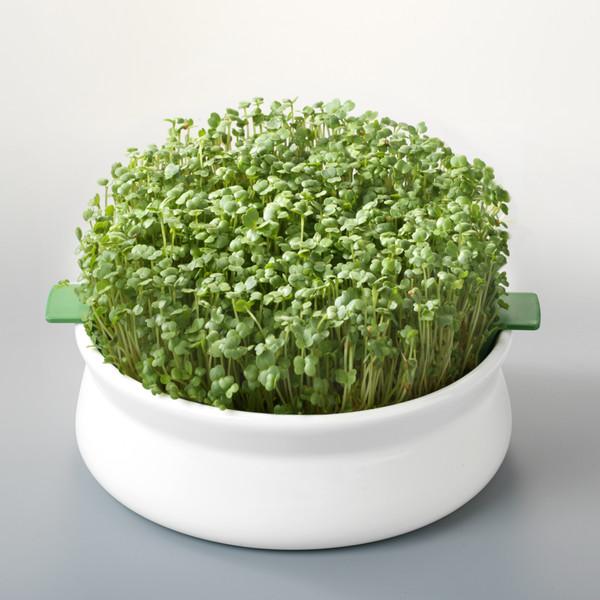 Vas pentru germinare